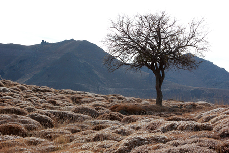 steppe climate, thorny land