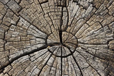 Tree ring texture background