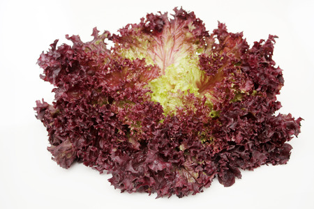 Red lettuce isolated on white background, Zdjęcie Seryjne - 121220295