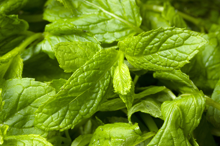 fresh and green mint