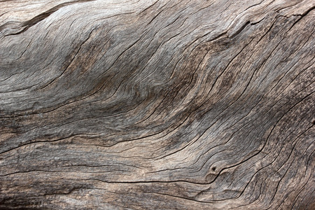 tree trunk texture abstract background