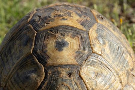 big turtle in nature