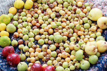 Mixed Wild Fruits, (Pear, Plum, Tangerine, Apple - Fruit, Quince)