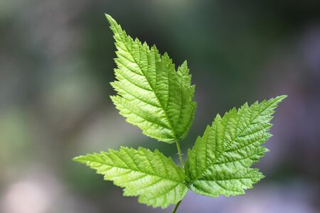 Green leaf texture, beautiful nature texture concept, copy space.