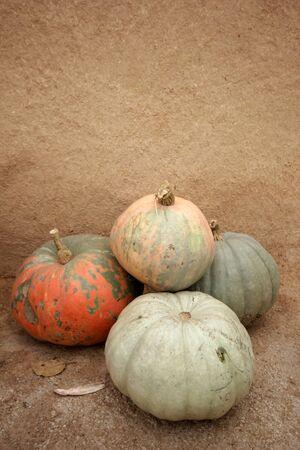 ripe and organic pumpkins in autumn