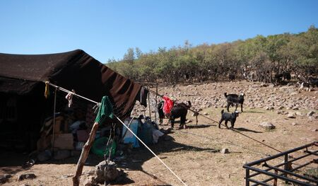 Goat and black tent, nomadic life. Stockfoto