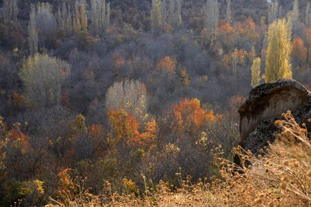colors of nature in autumn