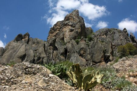 Rocky Hills and Verbascum thapsus Mullein Plant Фото со стока