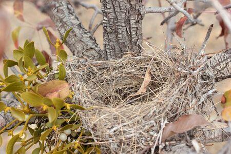 bird nest on tree branch