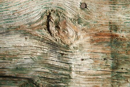 The texture of a wooden log. The texture of lumber.