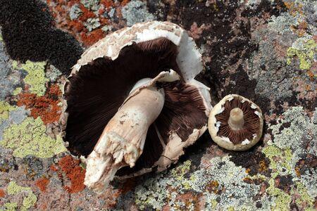 mushroom on the rock background Stock fotó - 131952989