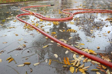 Autumn Leaves on the Pavement - Garden Hose Zdjęcie Seryjne