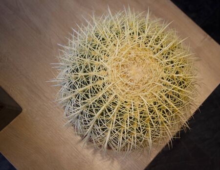 succulent plant on the table - cactus background