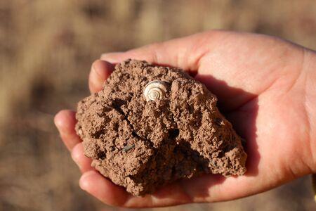 slug bark on the soil