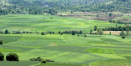 rural landscape green cultivated fields Banco de Imagens