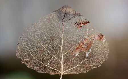 Macro shot of leaf vein skeleton. Abstract texture background.