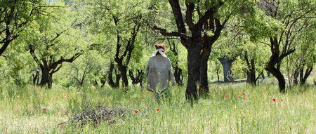 scarecrow hanging on fruit tree