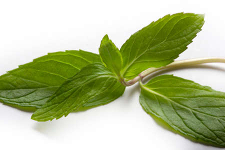 Fresh mint in closeup on a white background Banque d'images