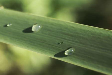 raindrops on the green leaf