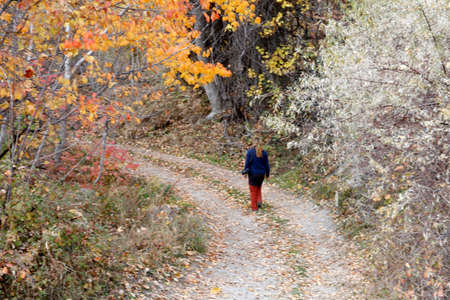 walking through the forest in autumn Banque d'images