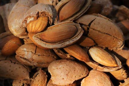 almond harvest time - broken almonds