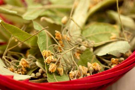 fresh linden leaves in the basket Banque d'images