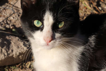 Green eyes and cute cat Banque d'images