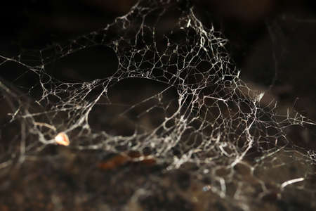 Spider web in nature. Nature background. Banque d'images