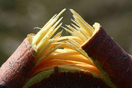 close-up of a broken tree branch