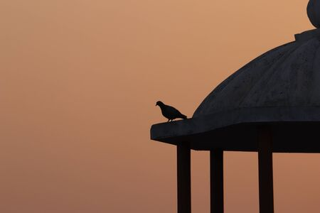 a pigeon sitting on the top of terrace during sunset