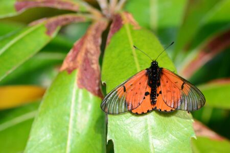 nautral: African butterfly resting on a leaf
