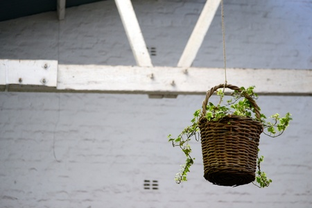 rafters: Landscape of flower basket haning from white rafters