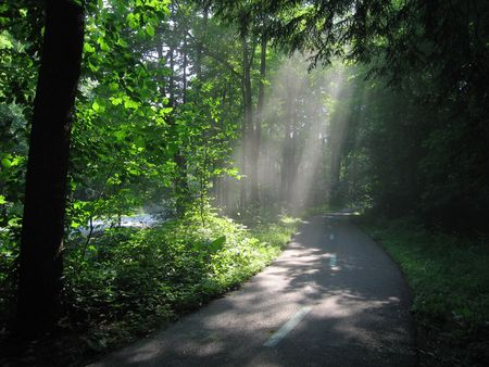 sun shade: Sunlight through Trees Stock Photo