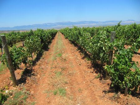 Vineyard in La Rioja, the largest wine producing region in Spain (near the town of Navarrete)