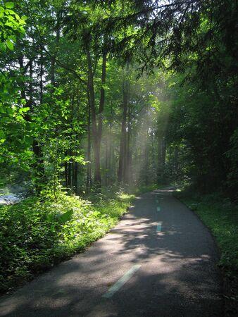 empedrado: Luz solar de transmisi�n a trav�s de los �rboles en el Metroparks de Cleveland