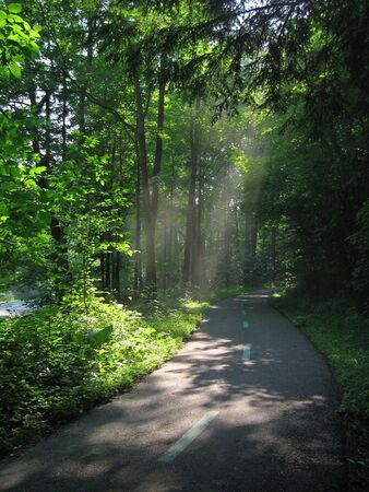 road bike: Sunlight streaming through trees in the Cleveland Metroparks