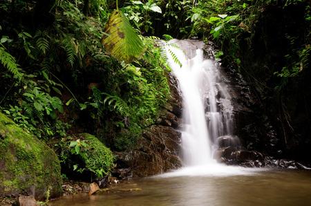 Waterfall in the cloudforest near Mindo, Ecuador