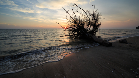 huge tree: beautiful scenery of sunset at beach of Pantai Remis with abandoned stump and waves motion