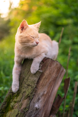 Close up portrait of cute and adorable cat sitting on wood with beautiful sunrise scenery in wild forest. Stock Photo