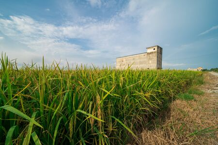 Water of trench system at paddy field, meadow, nature landscape view and bird house, harvest seasons with beautiful blue sky. Agricultural, industrial and tourism sector in Selangor Stock Photo
