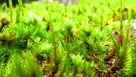 soothing: The Wild Green Moss Soothing My Eyes Stock Photo
