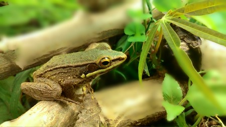 multicolored eye macro: Small Brown Frog in The Forest Stock Photo