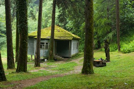 hut in forest photo