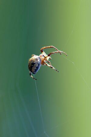 hangs: spider hangs in air web