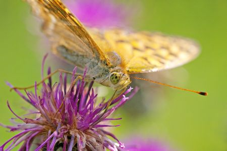 butterfly taking a morning sun bath Stock Photo - 5822866