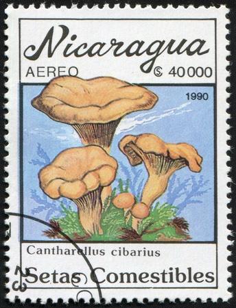 Postal miniature Nicaragua with colour graphic image of edible mushrooms Cantharellus cibarius - chanterelles ordinary