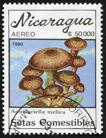 Postal miniature Nicaragua with colour graphic image of edible mushroom experience of the ordinary  autumn
