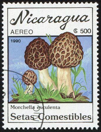 Postal miniature Nicaragua with colour graphic image of edible mushrooms Morchella esculenta - morels ordinary