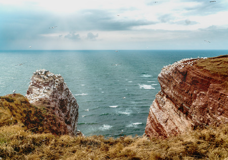 View from a grass edge over the mountain cliffs of Helgoland in the German north sea. Northern gannets and sea gulls fly in the stormy and cloudy air towards a sun stream creating a lens flare.