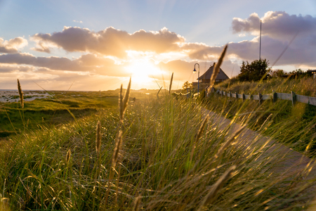 Sunset shining through the reeds in Amrum Germany. 免版税图像